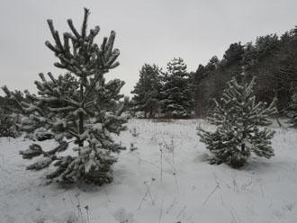 snow exposed with multi-pattern metering