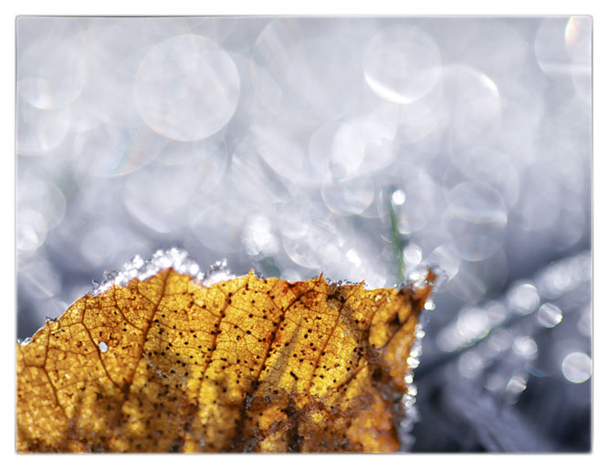 Frosty Morning Bokeh