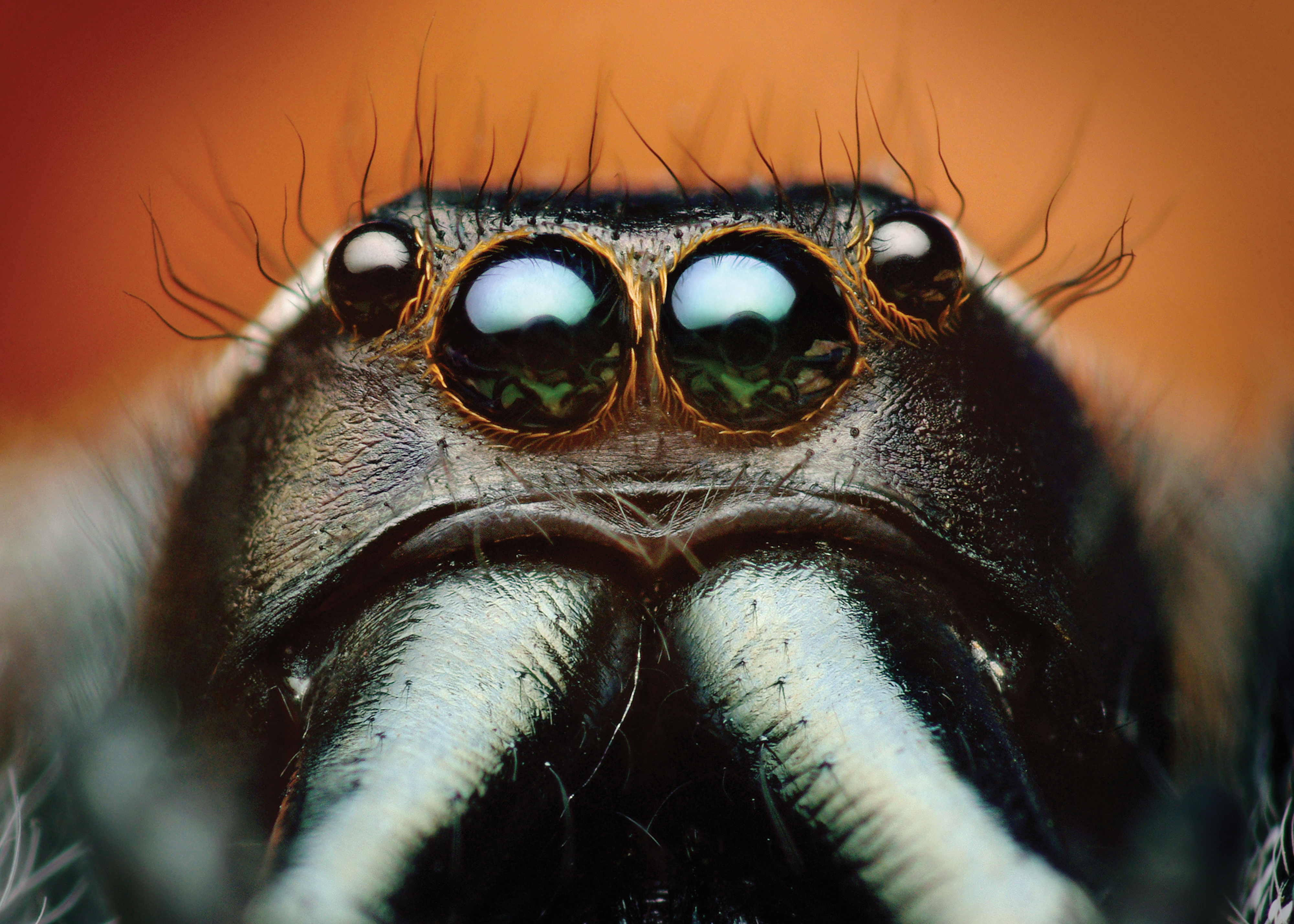 hover and zoom spider