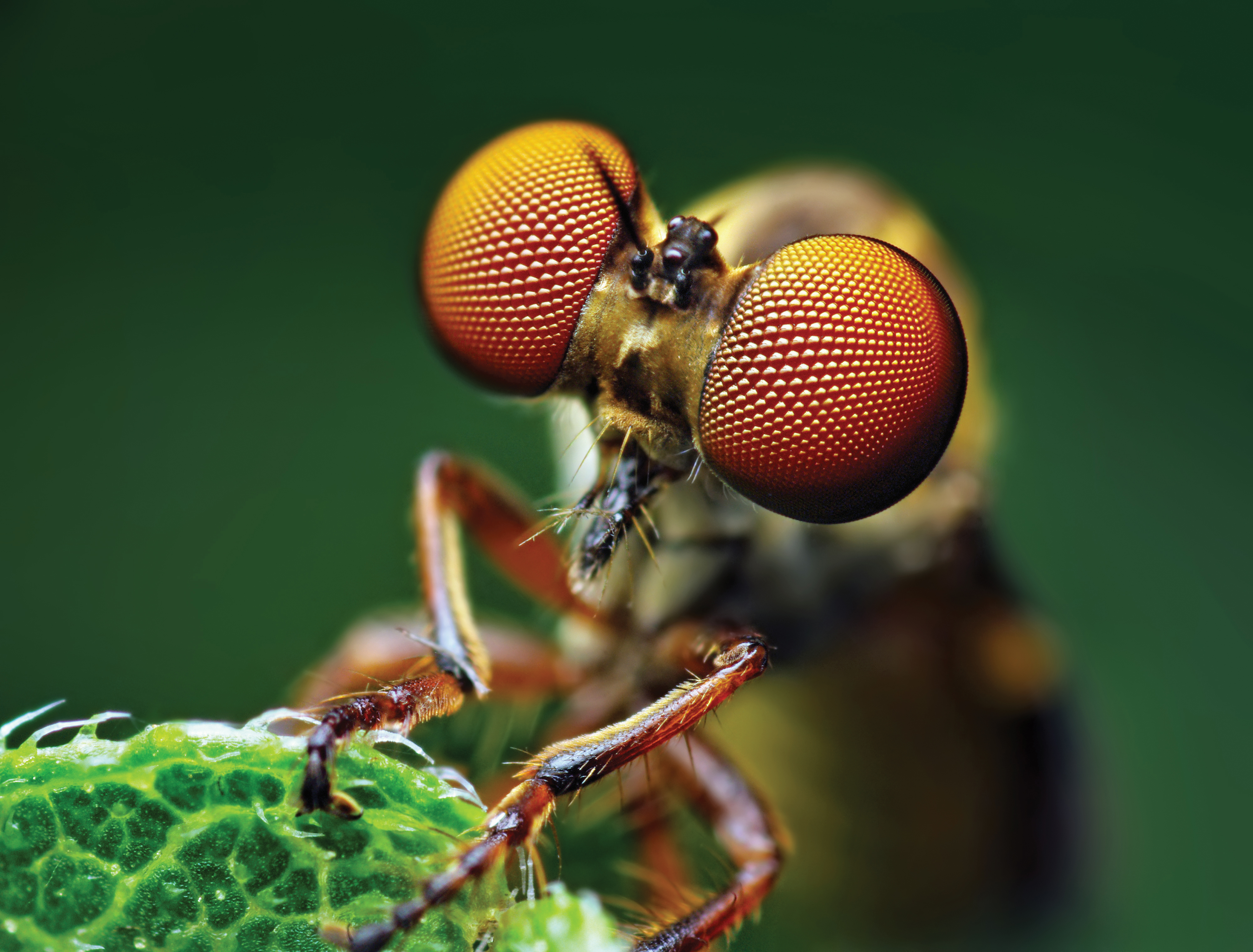 Macro Photography Interview With Thomas Shahan