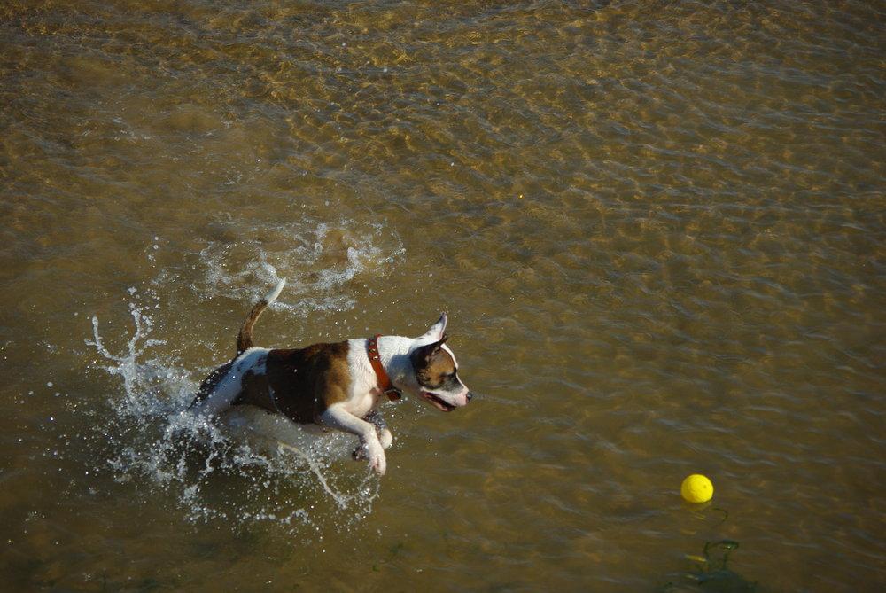 chase ball