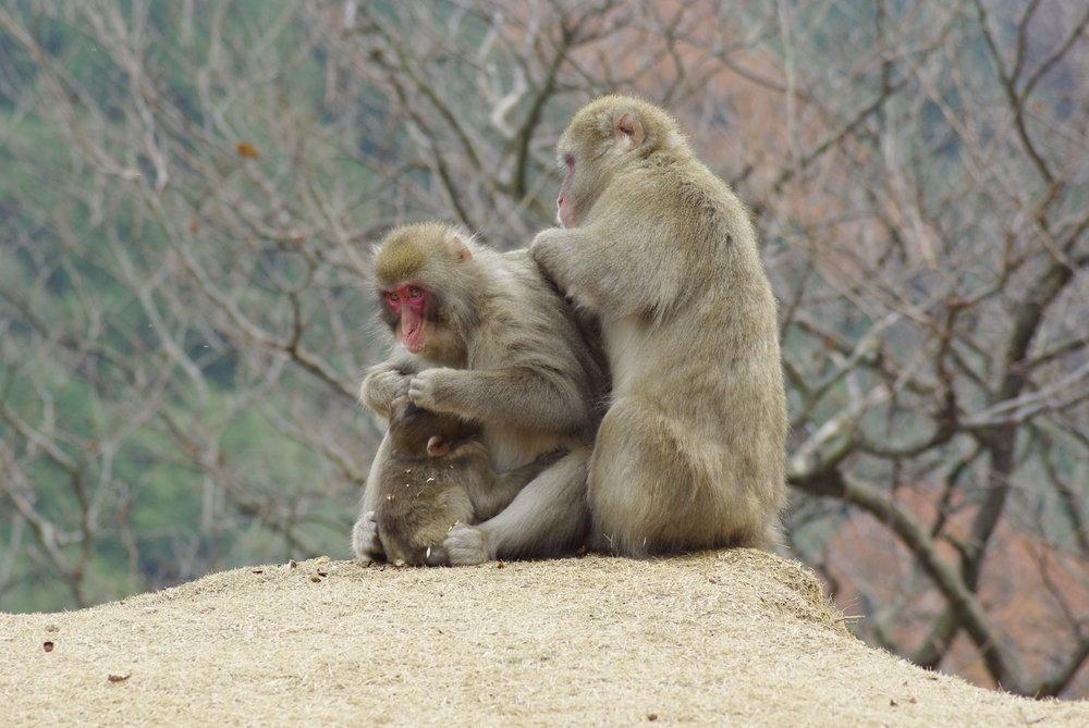 Mountain Monkey Family