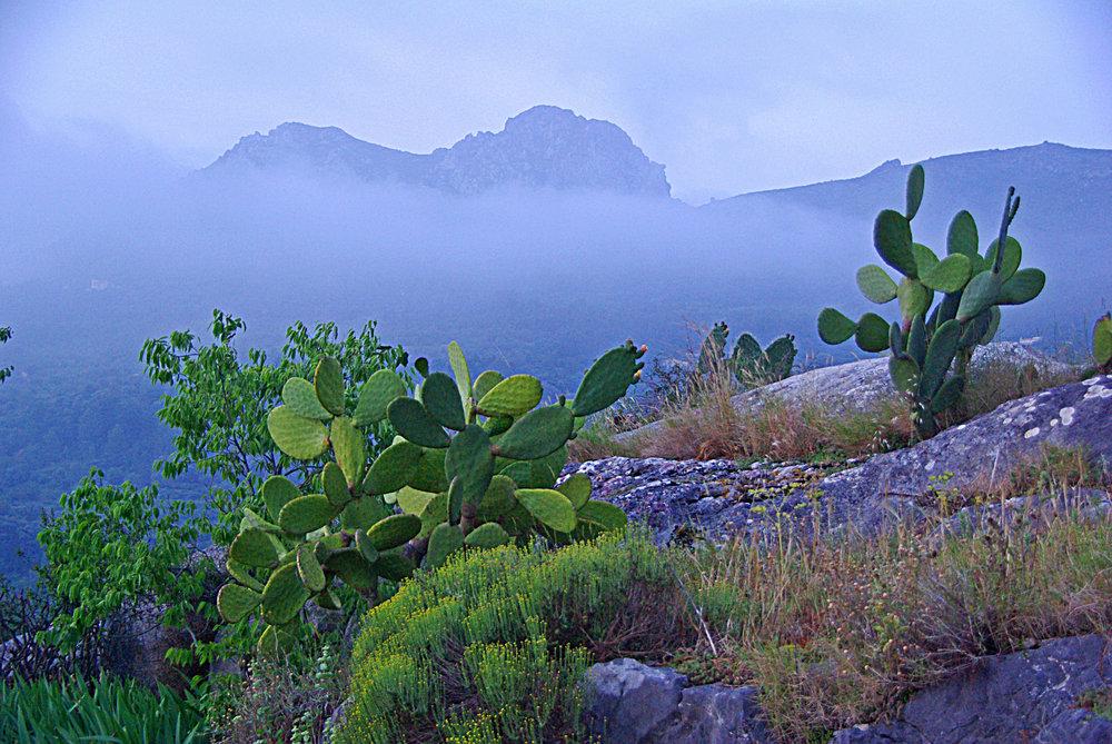 A misty morning in Spain