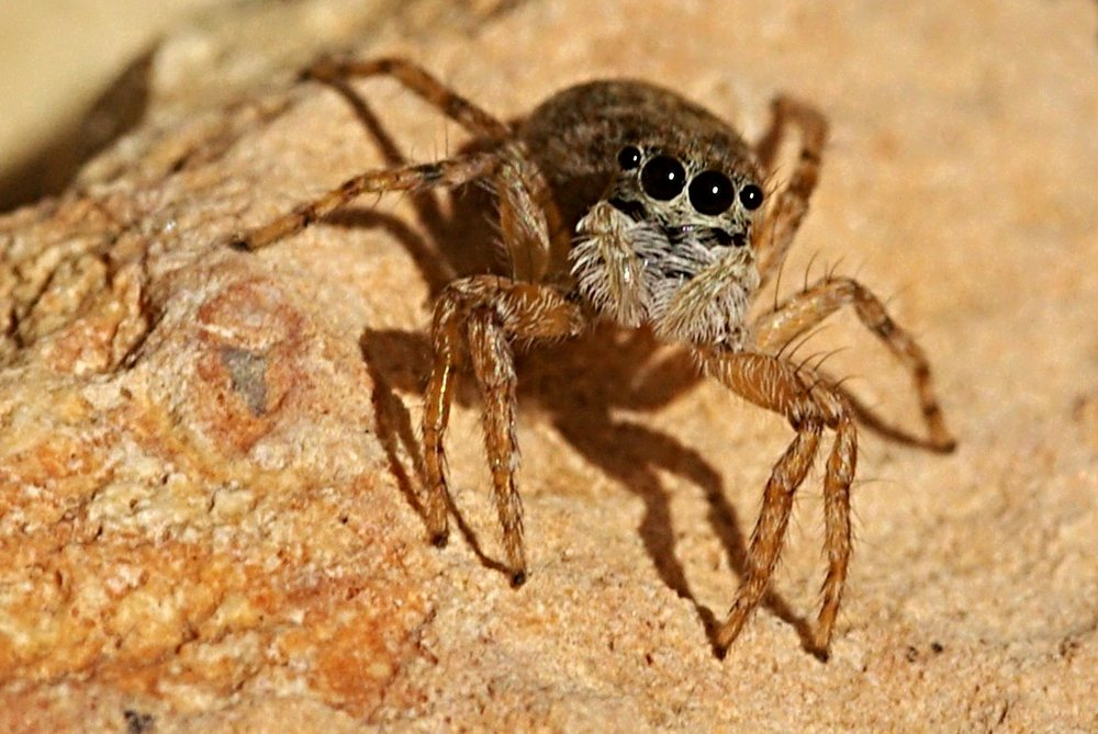 A very small spider