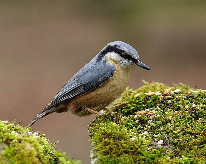 Dull day so It's another Bird!