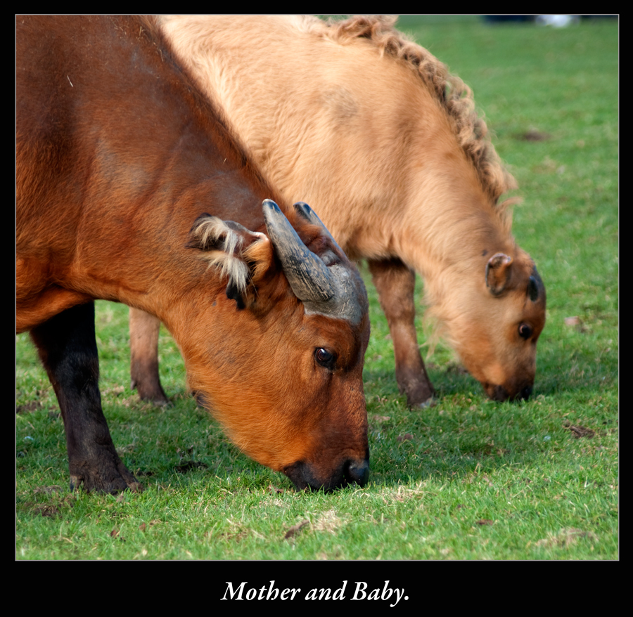 Mother and Baby.