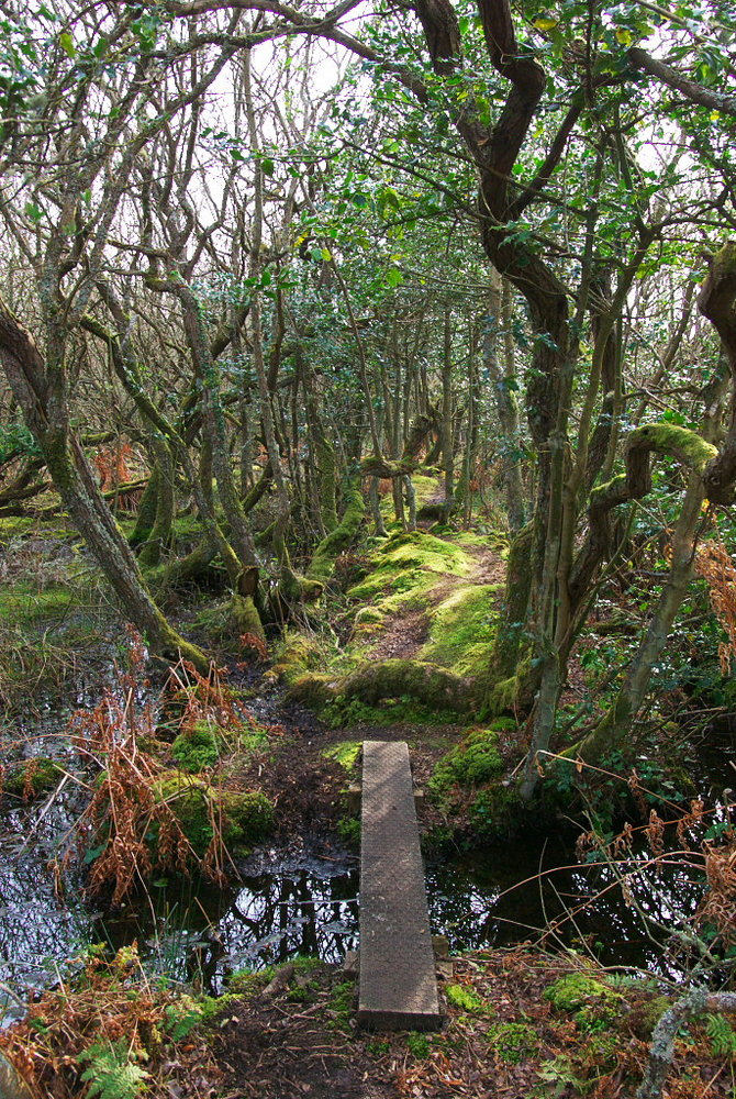 Curraghs Nature Reserve