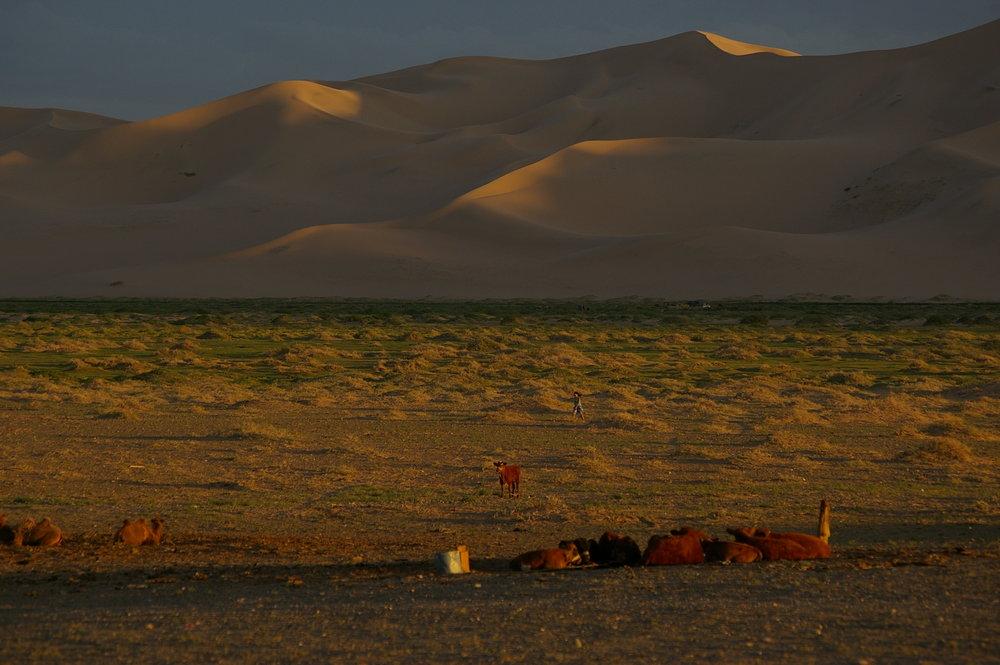 Evening in Sand Dunes, Mongolia