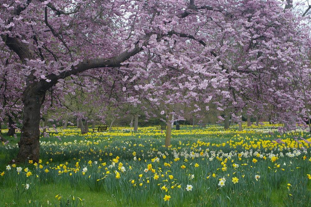 Spring at Hampton Court