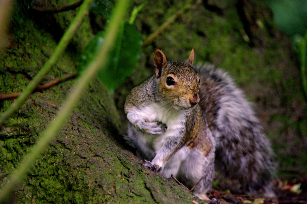 the sod who nicked my nuts