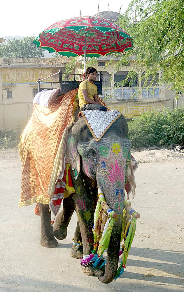 Decorated Elephant, Jaipur