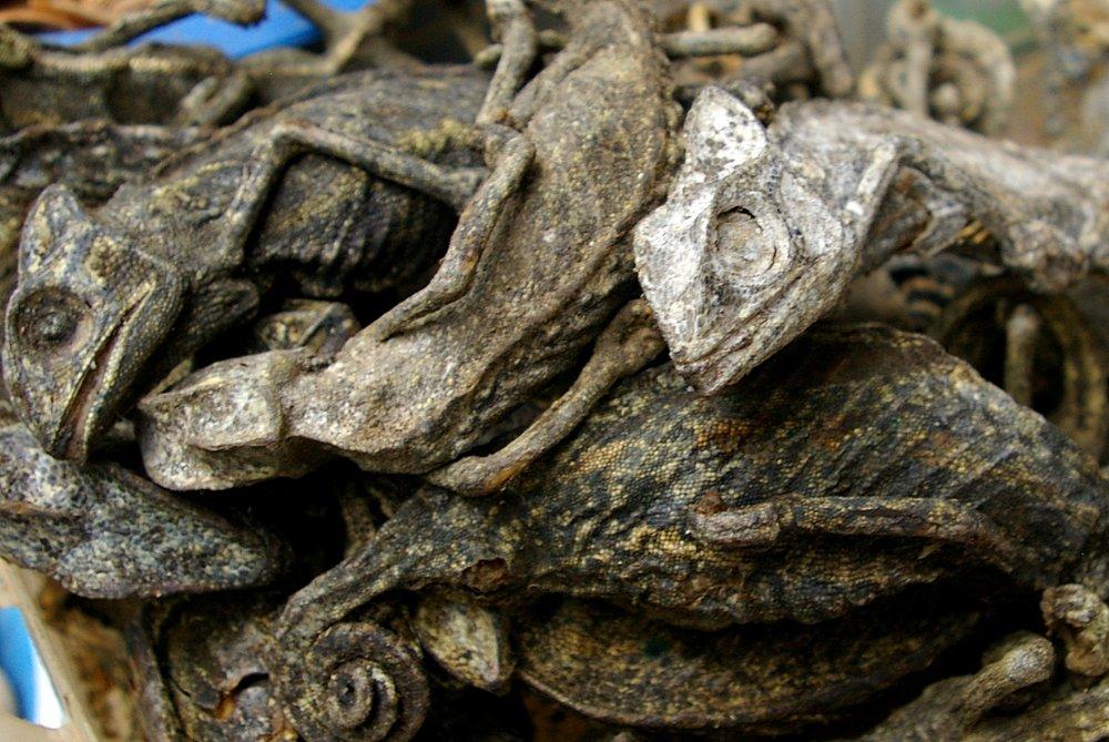 Dried Chameleons - Mankessim Market, Ghana