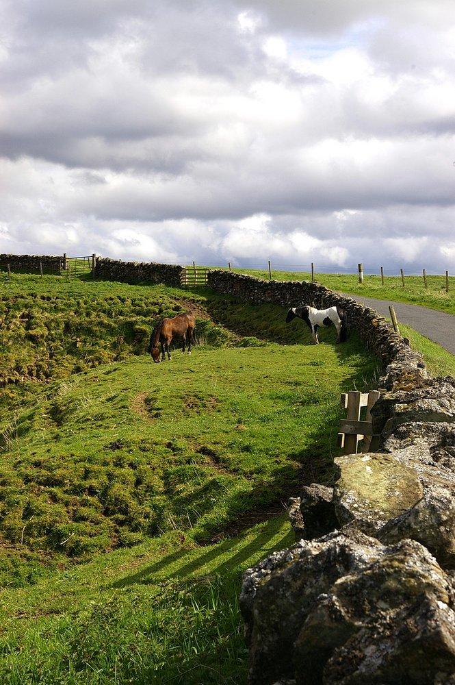 Horses Macbie Hill