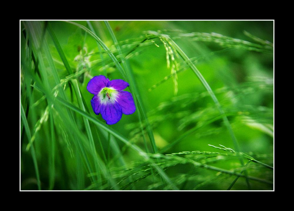 Blossom No4