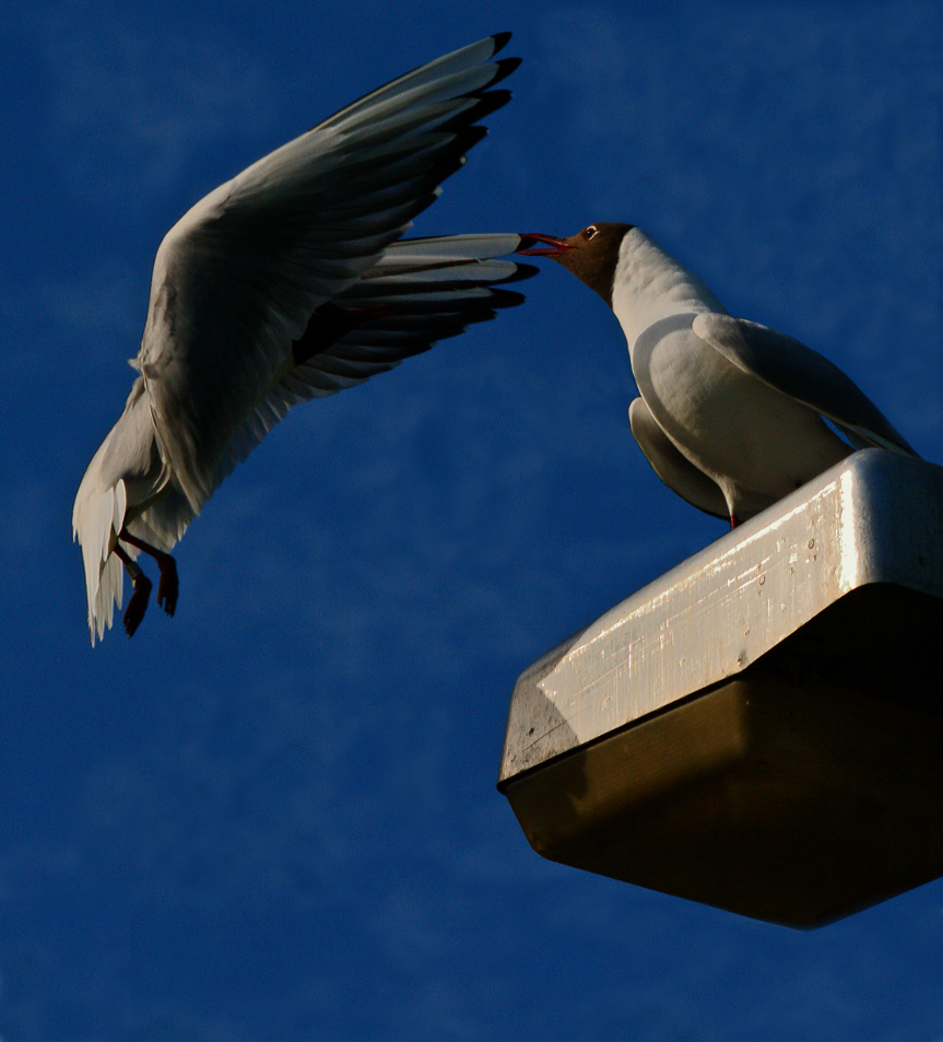 Gull's high level meeting