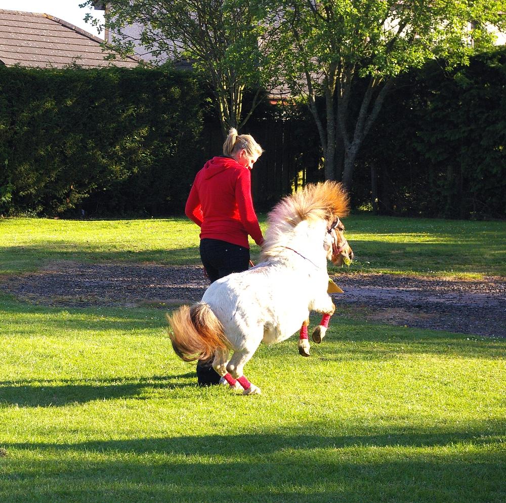 Pony Joy