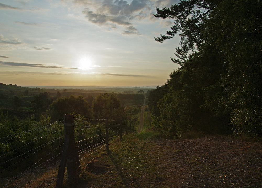 Surrey Hills at Dawn