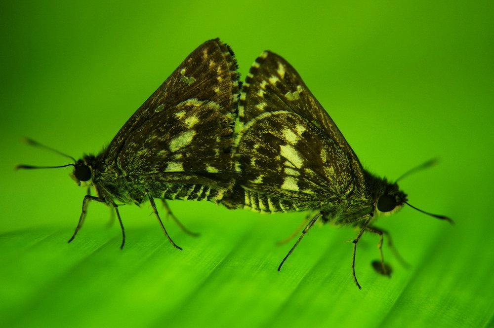 Wildlife-Butterfly #9