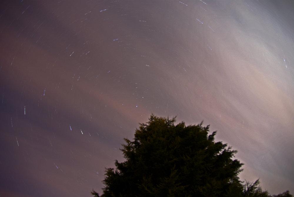 Night time tree.