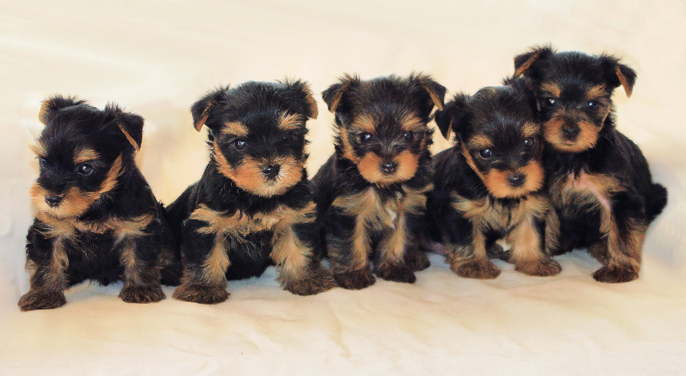Tara & Toby's Pups