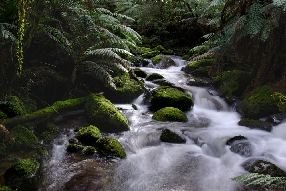 Taggerty River National park