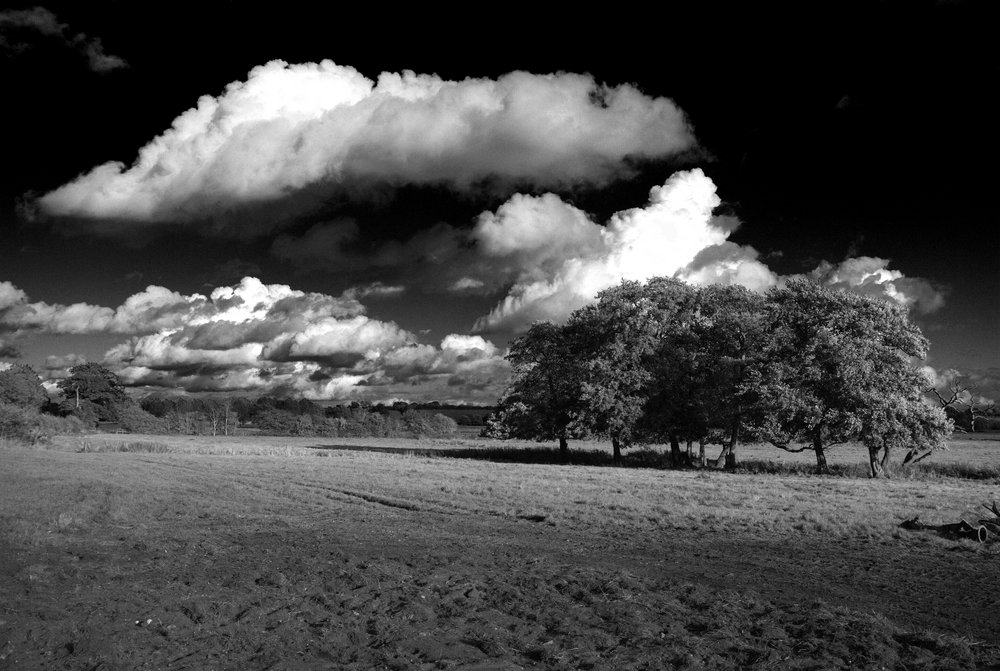 Down By The Waveney