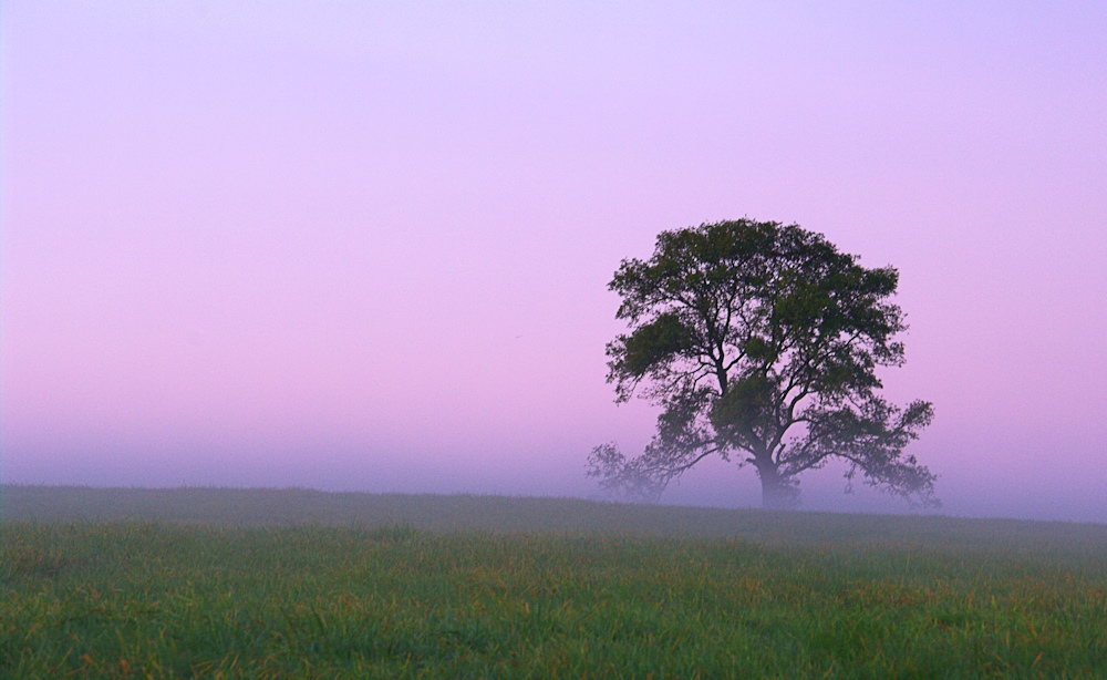 Lone tree on the Wiltshire Downs