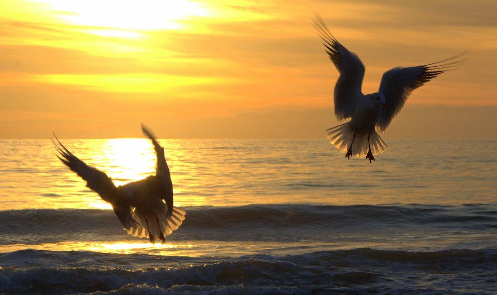 Sunset Angels