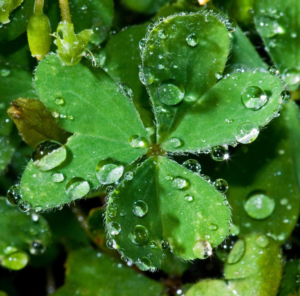 Dew-drops