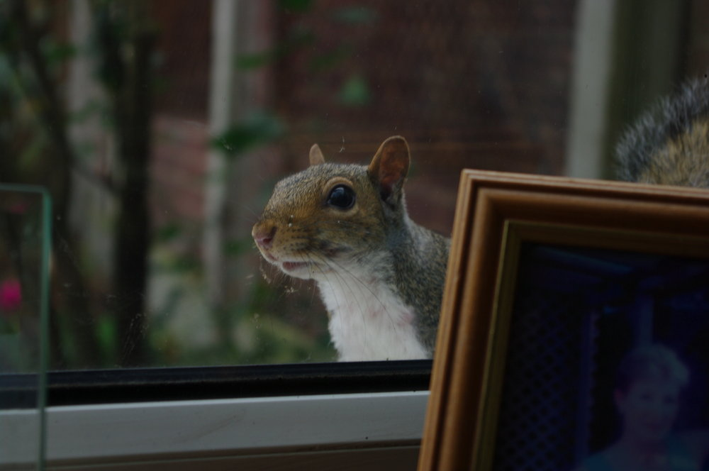 Where`s my nuts ?