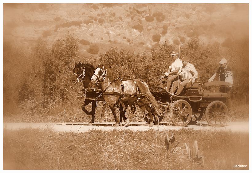 Horse N Cart