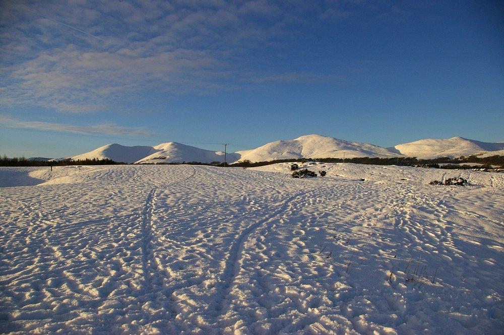 Winter Scene - Midlothian