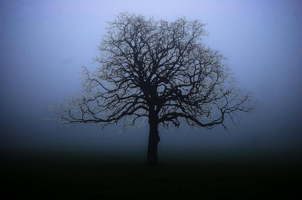 Alone in the Fog.