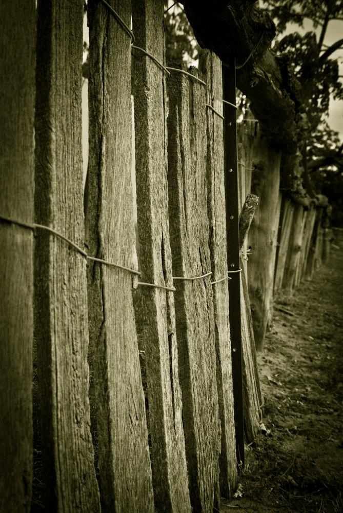 Sheepyard Fence