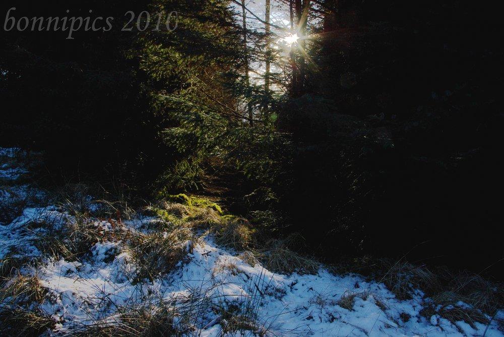 Sun Thru the Dense Forest