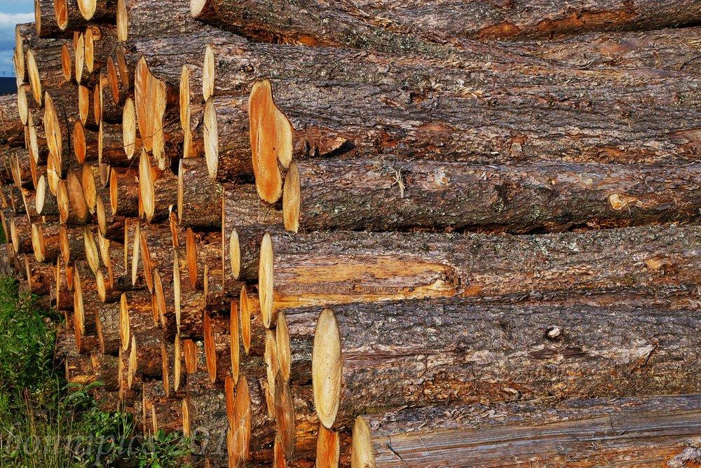 Cords of Felled Wood