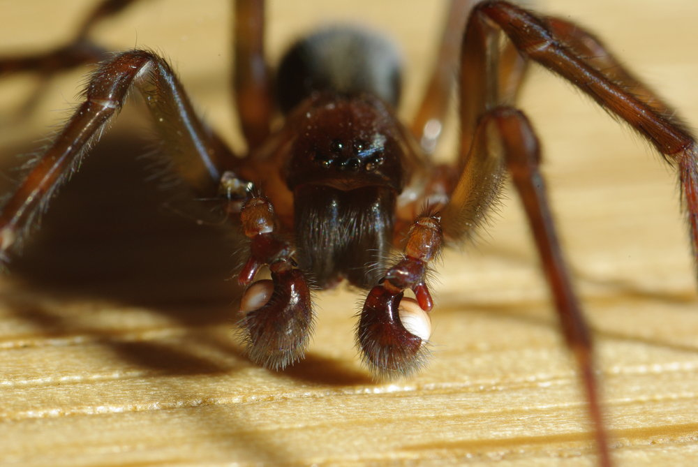 Oohh.... Close up spider