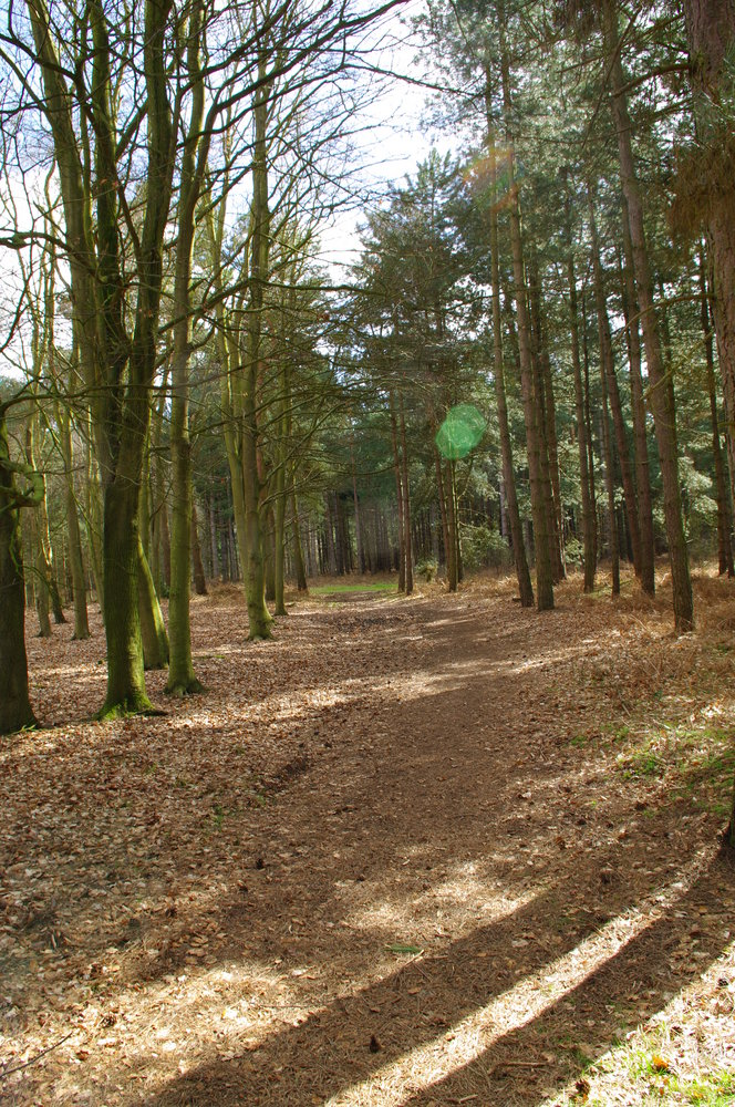 Rendlesham Forest.