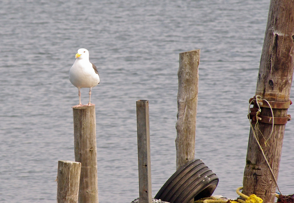 Seagull and Tire