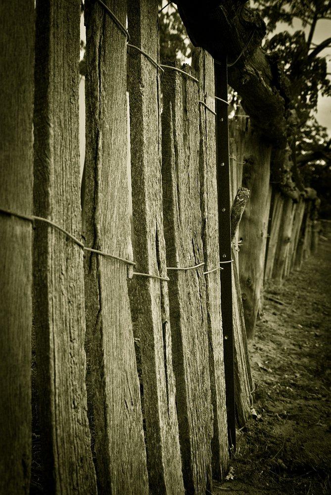 Stockyard fence
