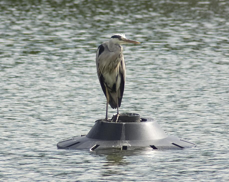 Aliens splash down on local lake
