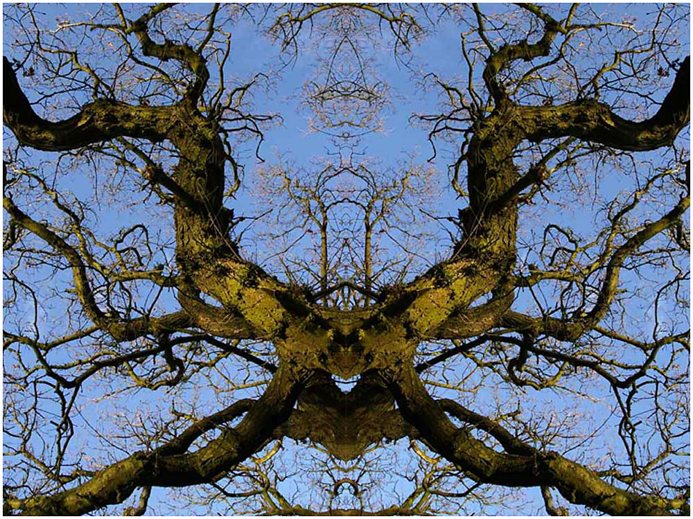 The Tree Spider