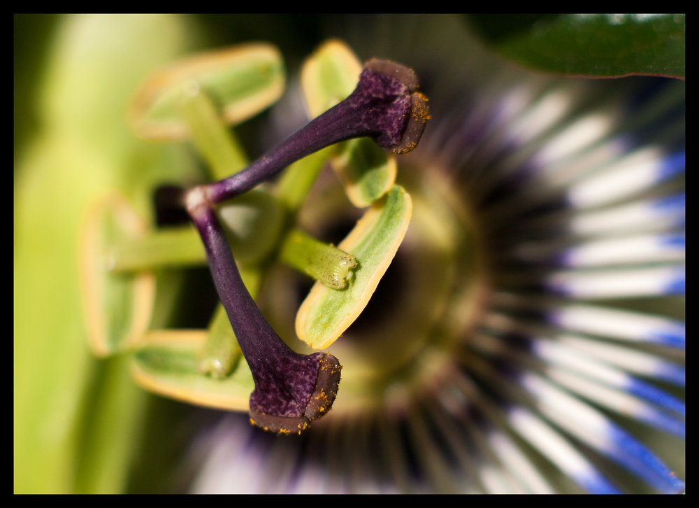 Trying out an extension tube