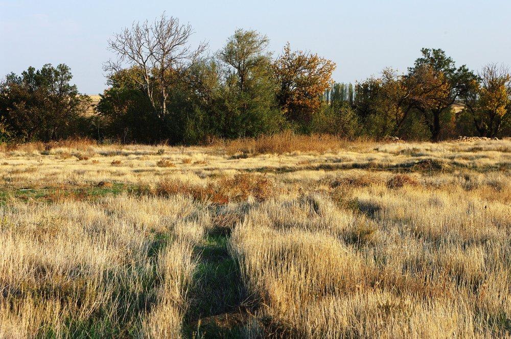 Dry Grass I