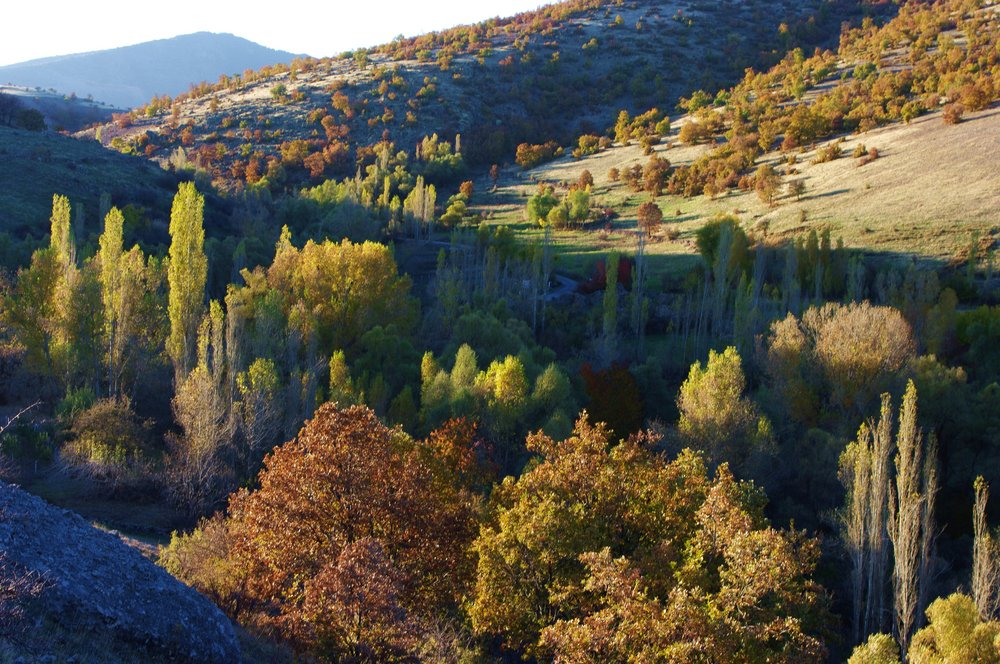 Autumn in Valley and  on Hill