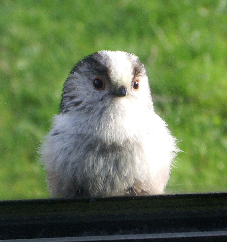 Nosy Bird