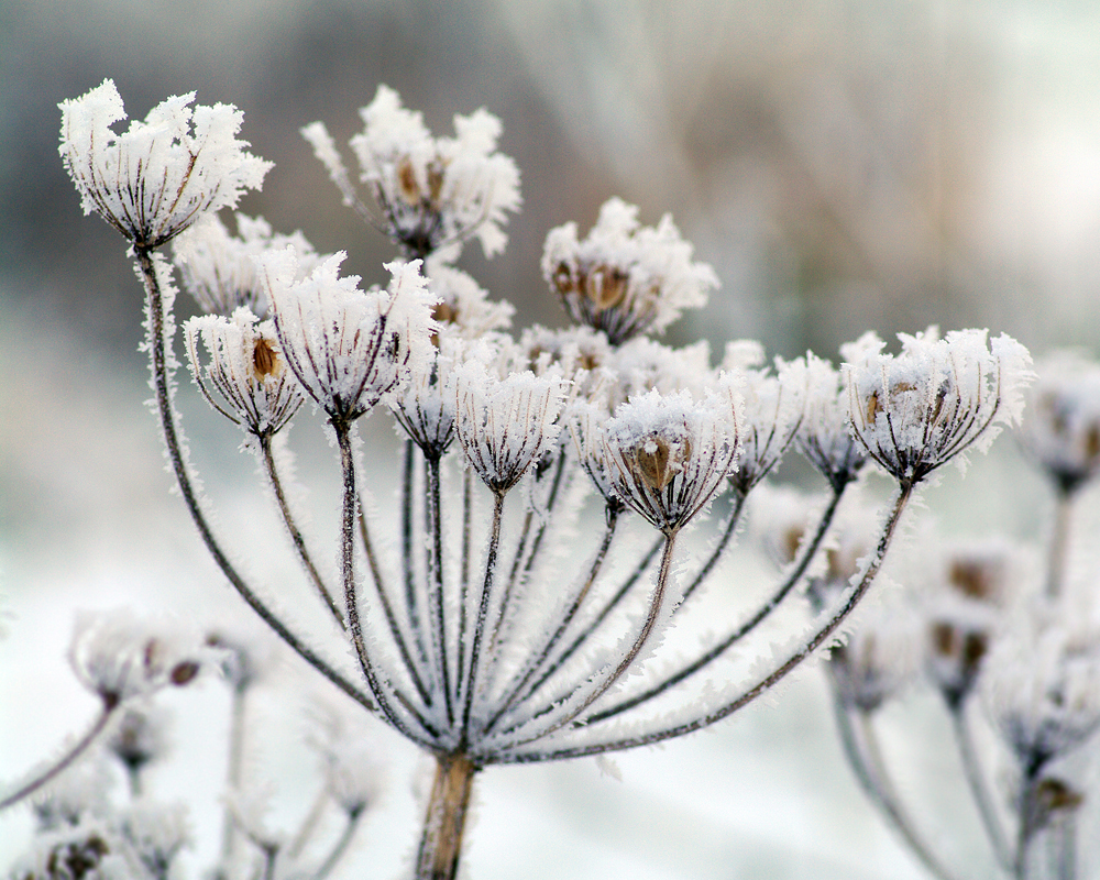 Winter one