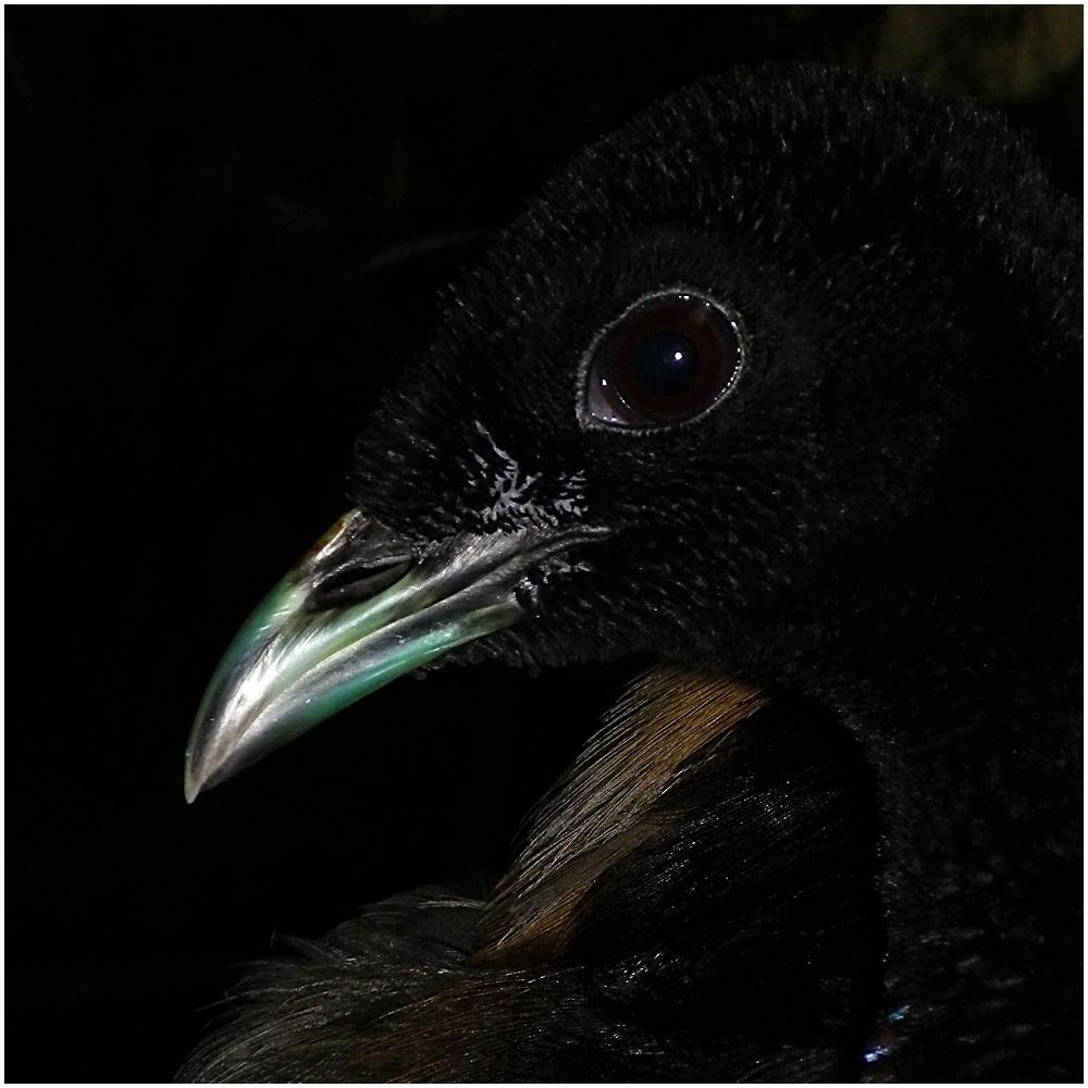 Eye and Beak