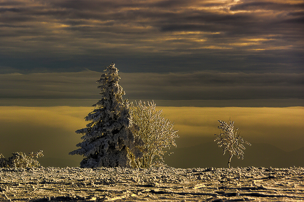Golden Cold