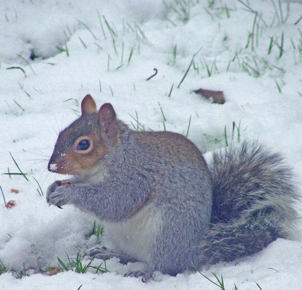 Where  did I put those nuts